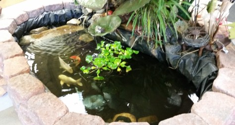 A little Koi Pond