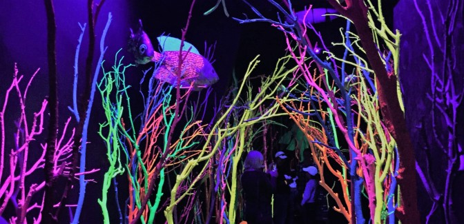 Meow Wolf: Choose Your Own Adventure